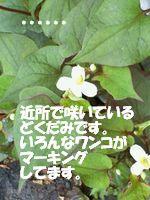 c0034743_15114182.jpg