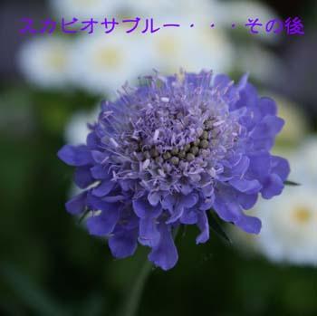 c0118928_10575414.jpg