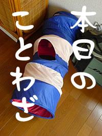 c0035001_145691.jpg
