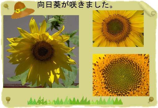 e0092286_18145973.jpg