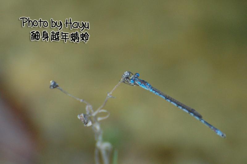 a0059328_1911361.jpg