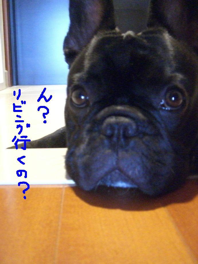 c0113109_0305252.jpg