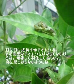 c0033202_14103040.jpg