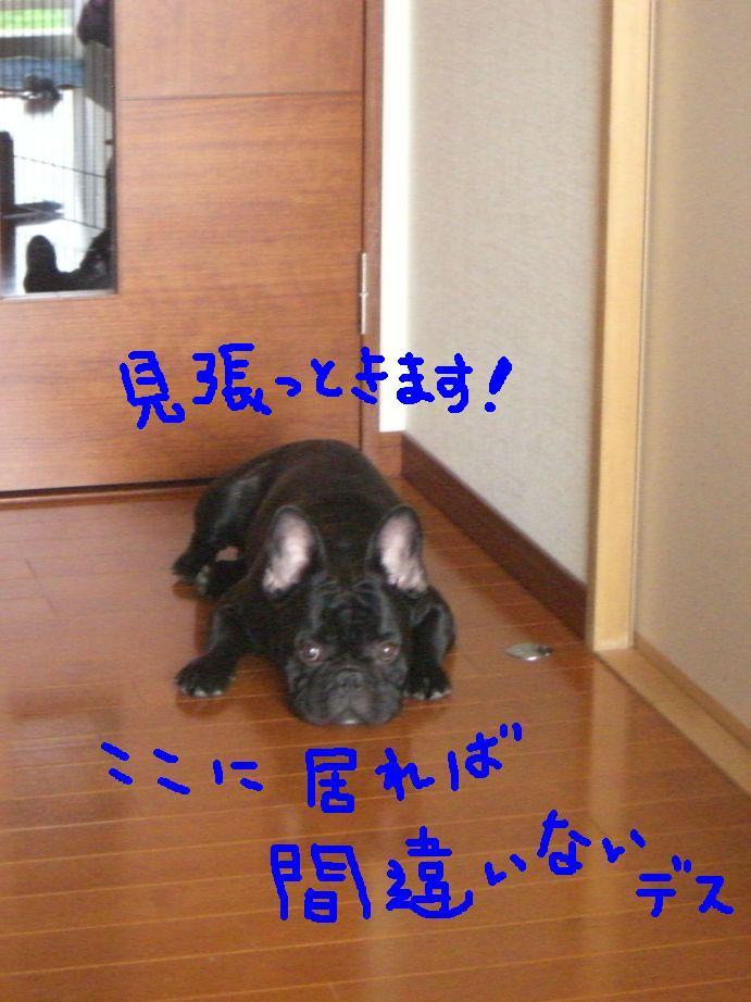 c0113109_232633.jpg
