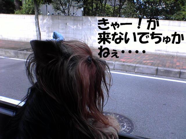c0031582_215744.jpg