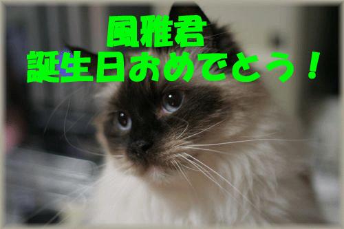 c0080002_2161845.jpg