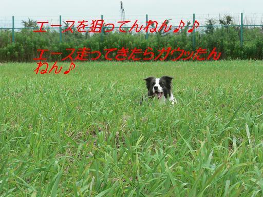 a0060497_15221943.jpg