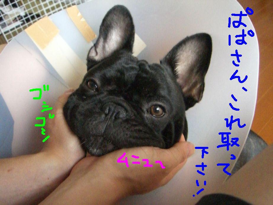 c0113109_23292657.jpg