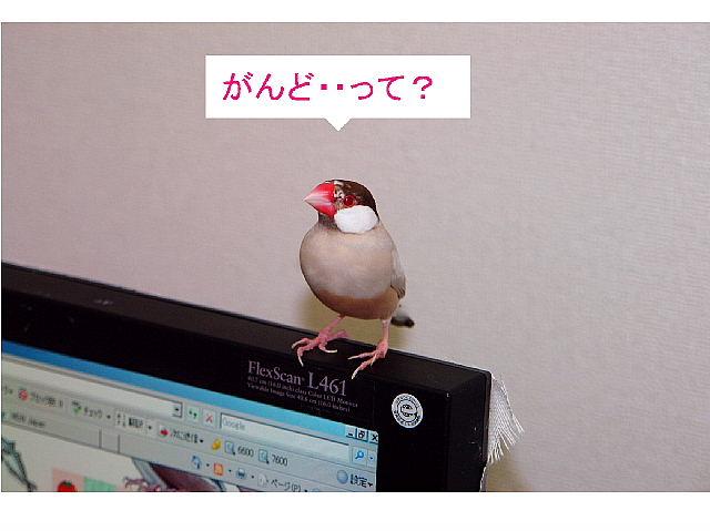 a0019545_1035334.jpg