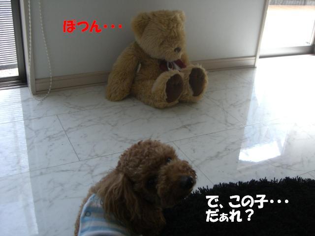 a0088086_16495636.jpg