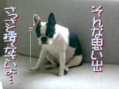a0086698_05855.jpg