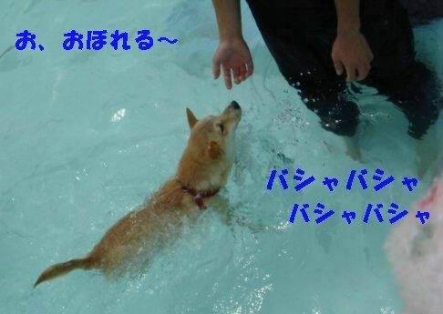 a0089865_21451343.jpg