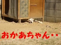 e0097958_2012788.jpg
