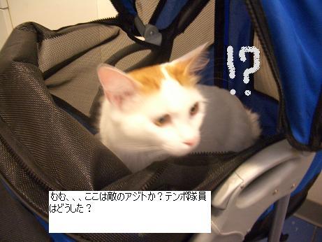 c0132537_1004379.jpg