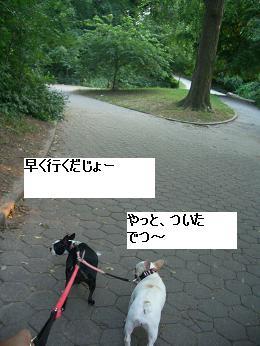 c0132537_11262468.jpg