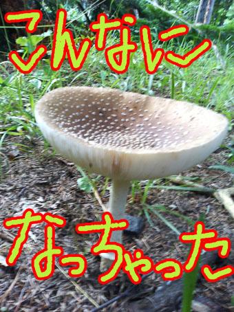 c0105157_20112863.jpg