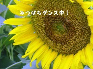 c0017505_1620377.jpg