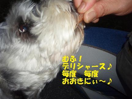 c0098501_213039.jpg