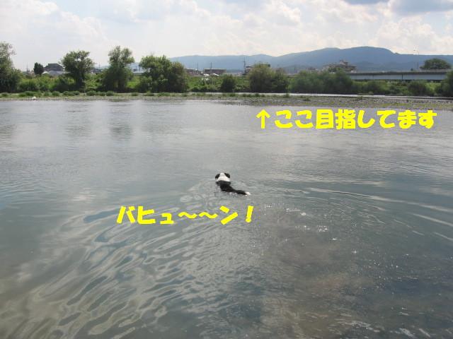 e0117976_15541332.jpg