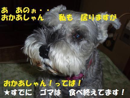c0098501_20284626.jpg