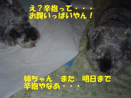 c0098501_20332488.jpg