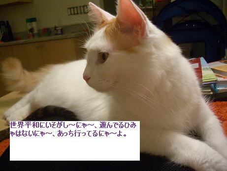 c0132537_622741.jpg