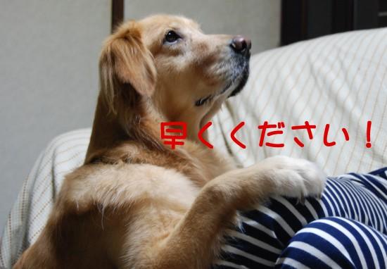 e0020166_14481979.jpg