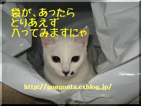 e0085147_11414416.jpg