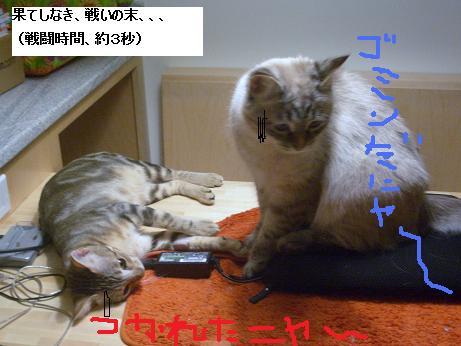 c0132537_11501435.jpg