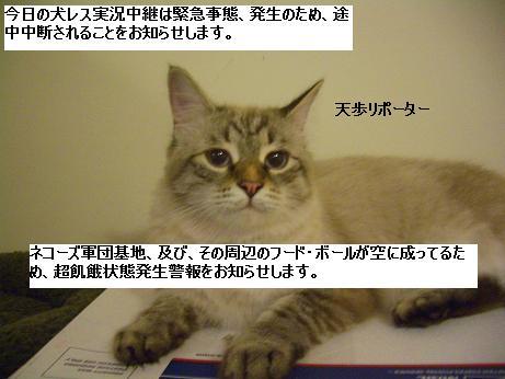 c0132537_11575615.jpg