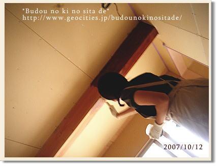 c0103049_811363.jpg