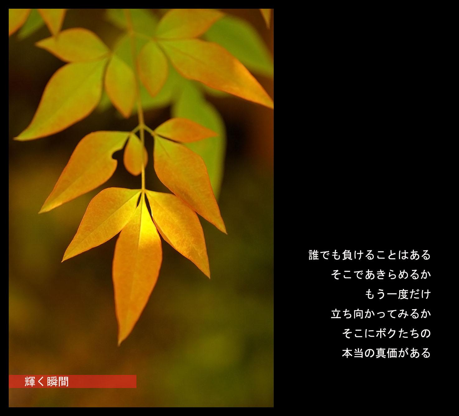c0112724_22144579.jpg