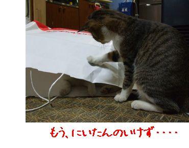 c0103205_1374588.jpg