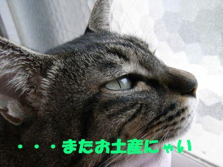 e0064547_0444359.jpg