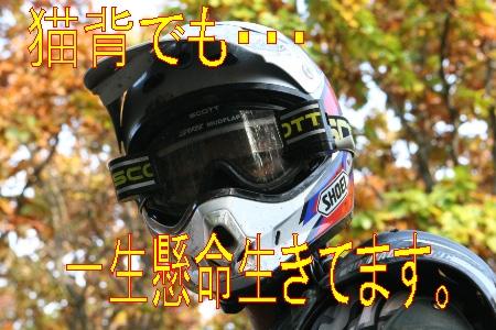 e0022736_1918396.jpg