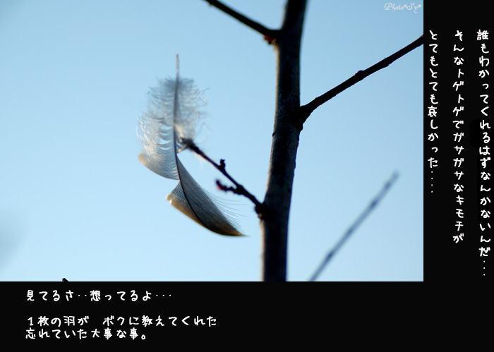 c0144353_1223753.jpg