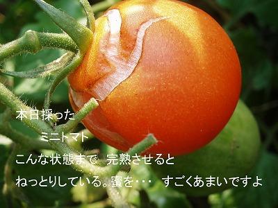 c0129682_1485450.jpg