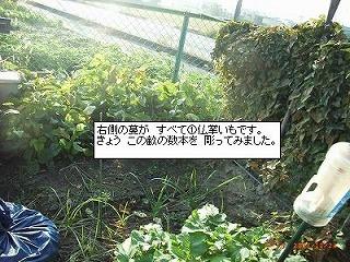 c0126271_19102150.jpg