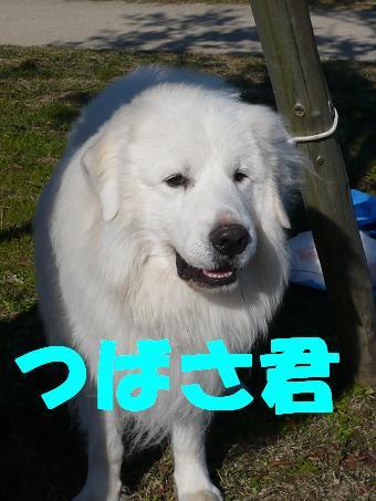 a0048526_025341.jpg