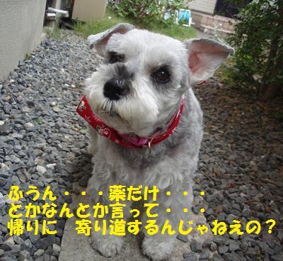 c0098501_16543768.jpg