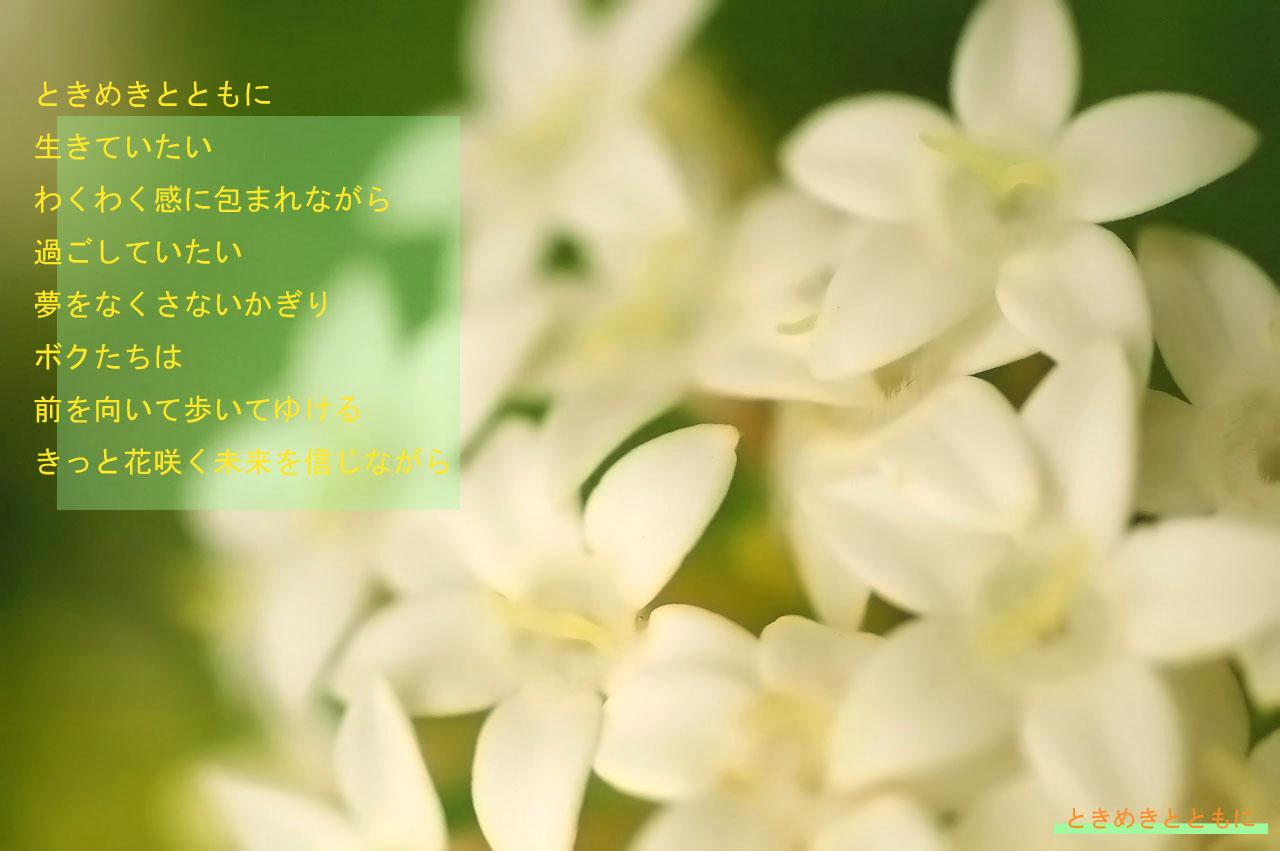 c0112724_1917990.jpg
