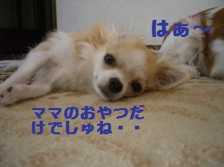 c0132205_2091090.jpg