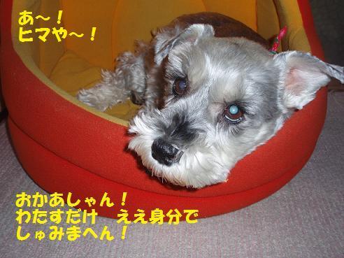 c0098501_1645095.jpg