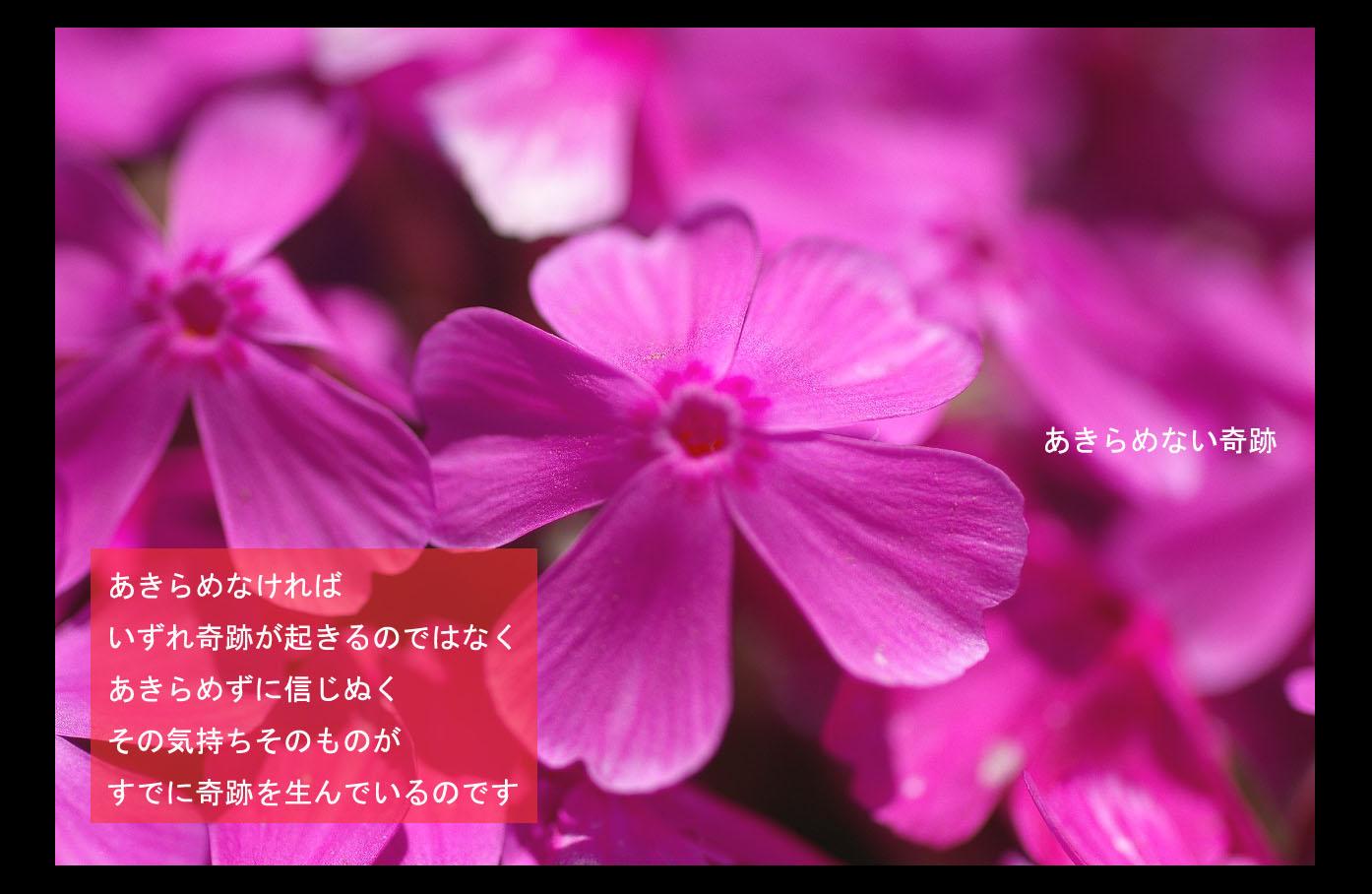 c0112724_19101060.jpg