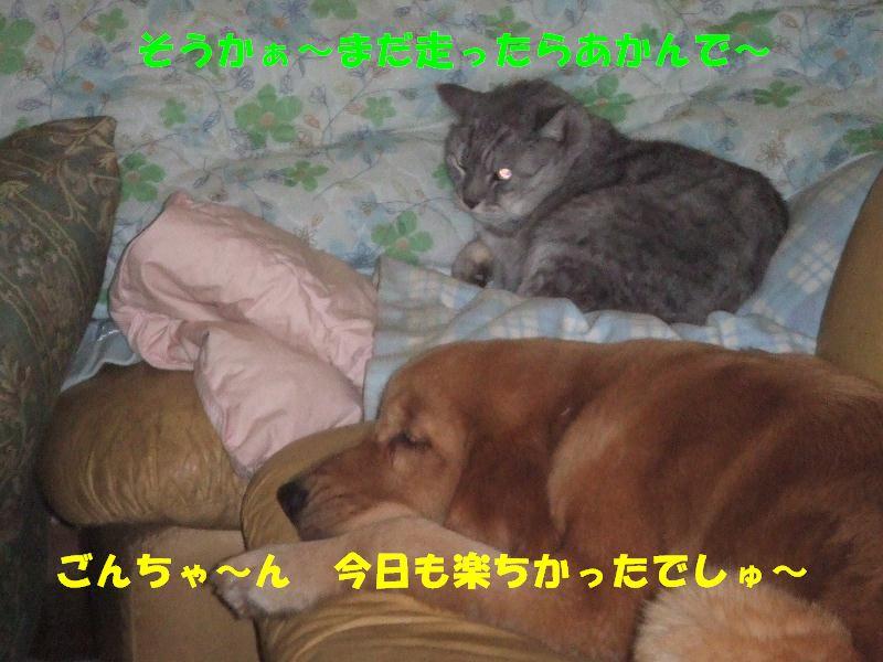 a0105425_21574011.jpg