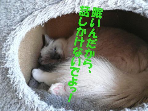 c0117597_2011779.jpg