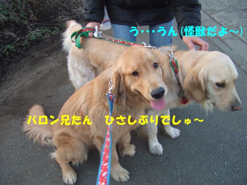 a0105425_20104459.jpg