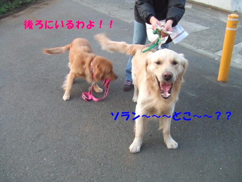 a0105425_20131052.jpg