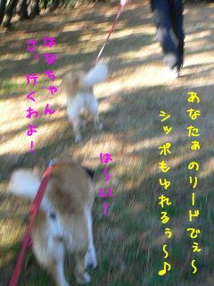 c0006757_9401376.jpg