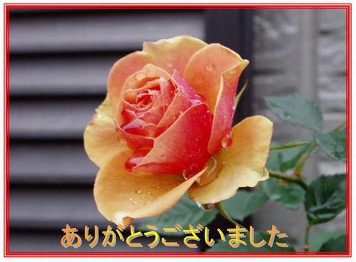 c0051107_22265656.jpg